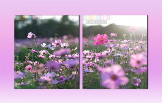 Tranh canvas hoa tươi trang trí lối đi cầu thang mã LD01